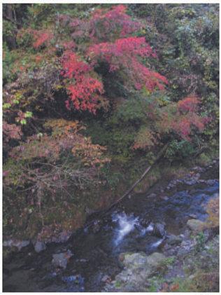 2005年11月14日 檜原村 藤原 北秋川