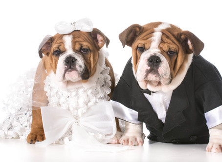 How to Include your Furry Friend in your Wedding - Best Tips and Ideas!