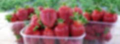Erdbeeren2.JPG
