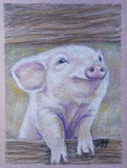 This Little Piggy Went...