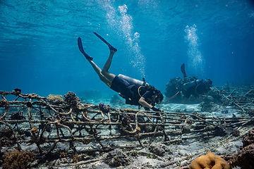 Biorock-Reef-Restoration-Course-Gili-Eco