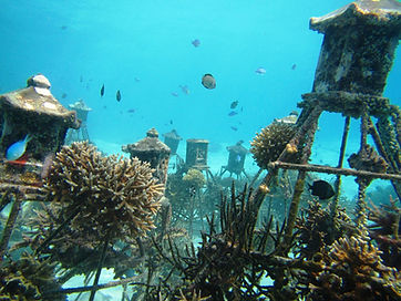 Giliecotrust Coral Reef Restoration.jpg