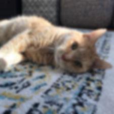 We love our senior kitty clients! #seniorcatsrule #orangekitty #gingercat #yardley #yardleycatsitter