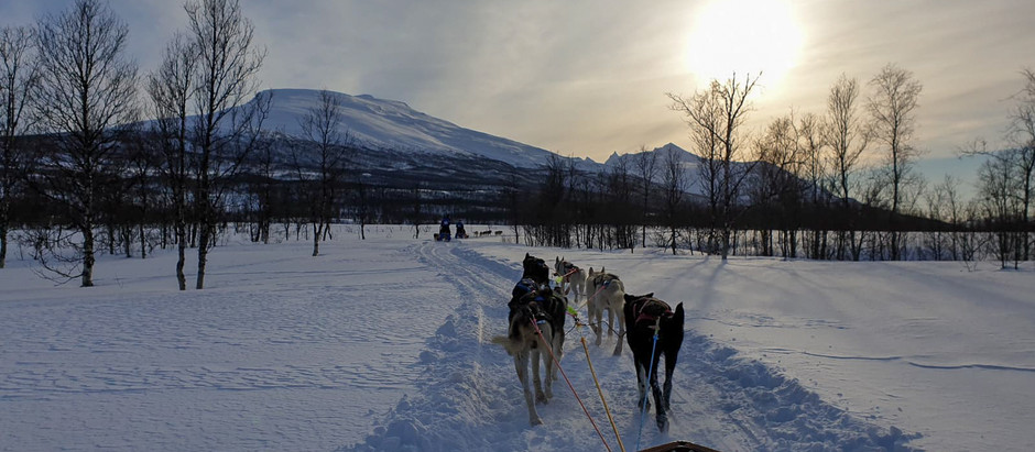 Dog Sledding expedition