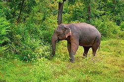 Safari in Kaudulla National Park