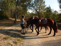 Randonnées à cheval, horse aventure,