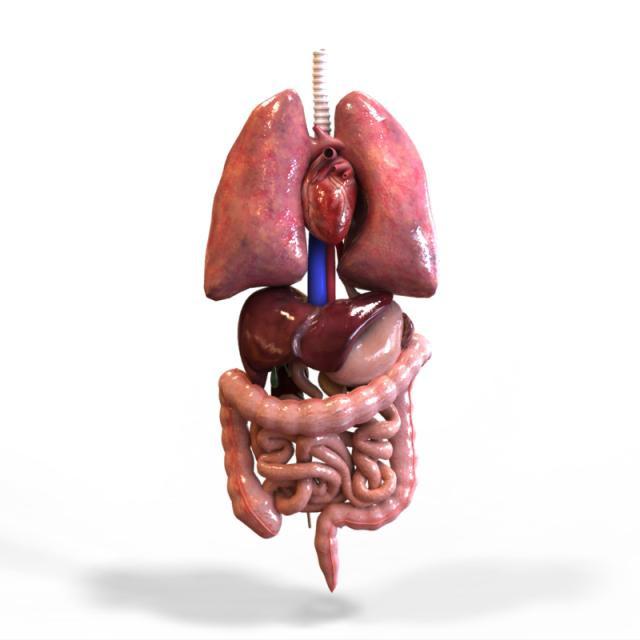 organs.jpeg