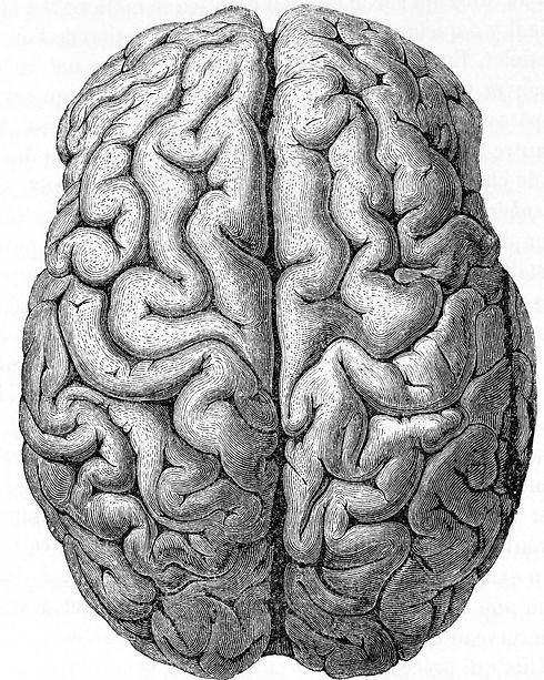 Image Brain (credit needed).jpg