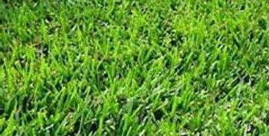 Riata Bermudagrass