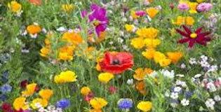Wildflower mix per lb