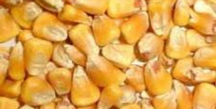 Deer Corn 50#