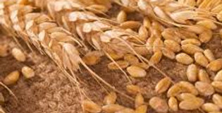 Hard Red Winter Wheat 50#
