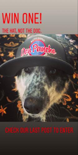 Doggies Get Clicks!