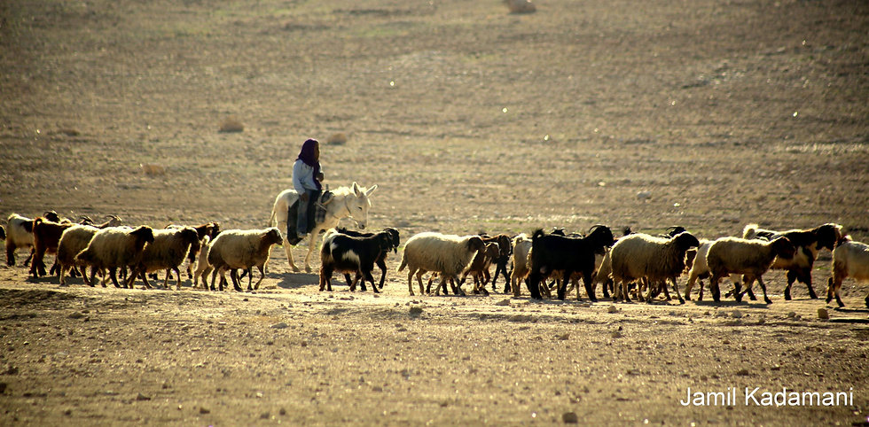 kadmani - Judean Desert.jpg