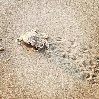 Cancer traces in the sand Seaside, Haifa