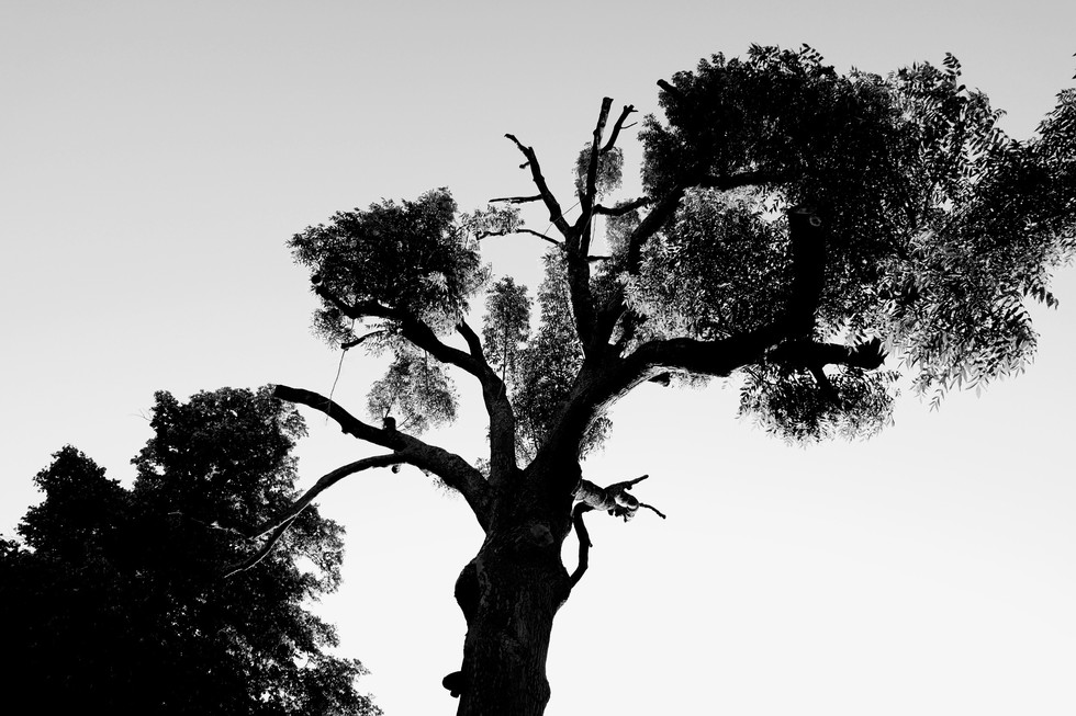 Magic Tree #1
