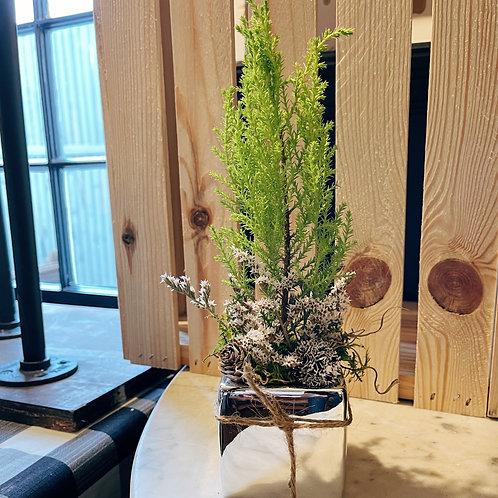 Mini Silver Cube with Dwarf Lemon Cypress Tree, German Status, And Pine Cones