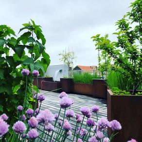 Un jardin de ville suspendu.