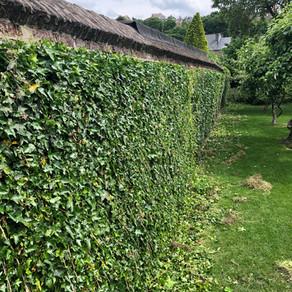 Entretien d'un jardin de ville à Huy