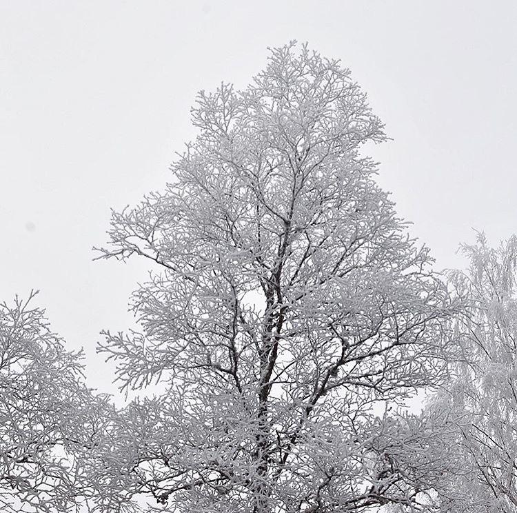 feuillages d'hiver