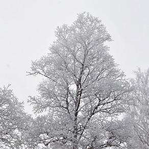 Prêt pour l'hiver en cinq étapes!