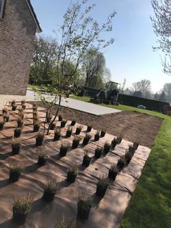 DP Landscape Studio francois piette architecte de jardins plantations pennisetum alopecuroides hamel
