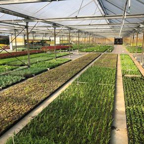 Choix et sélection des plantes