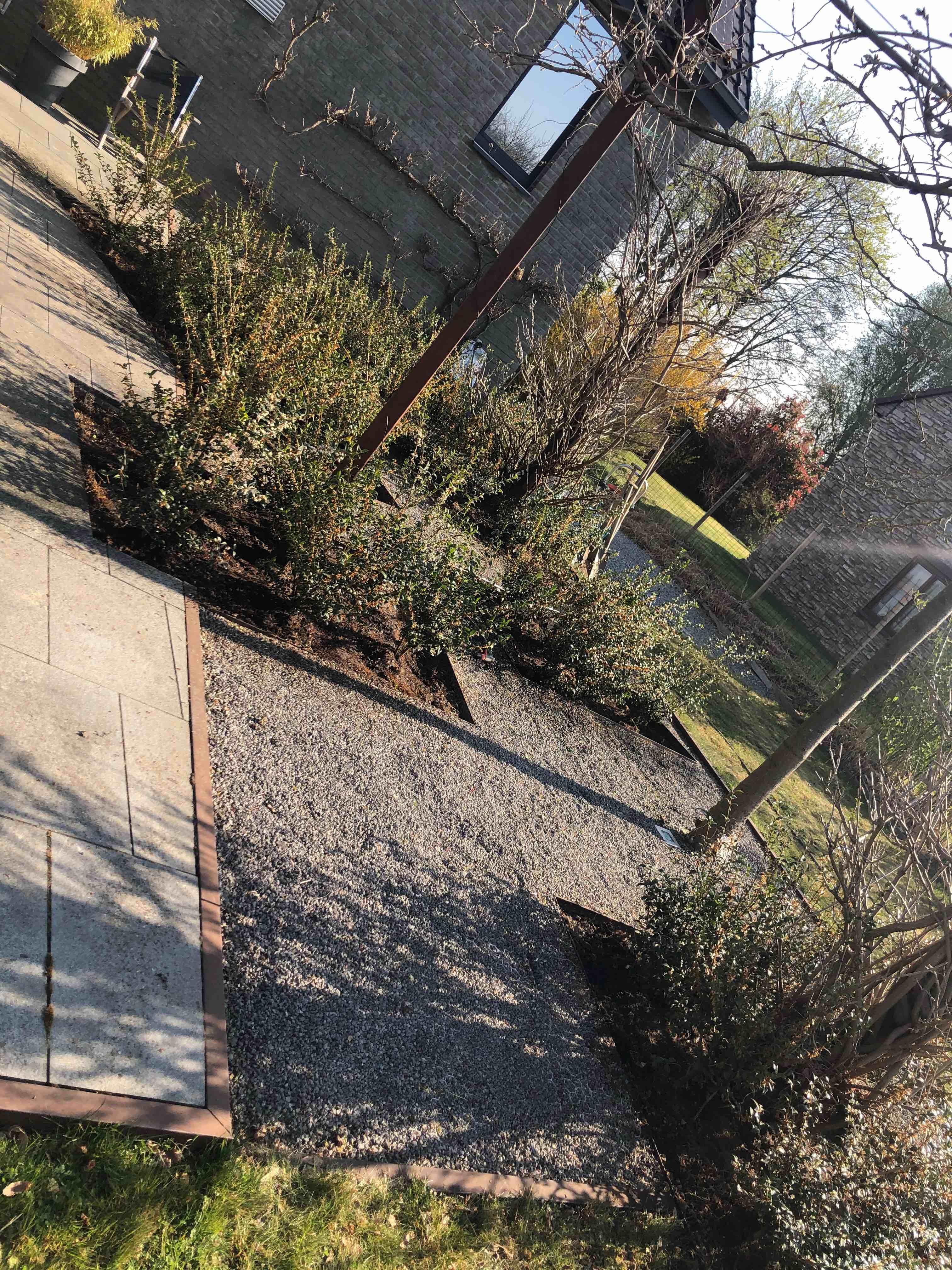 DP Landscape Studio francois piette architecte de jardins bordures acier corten osmanthus burkwoodi