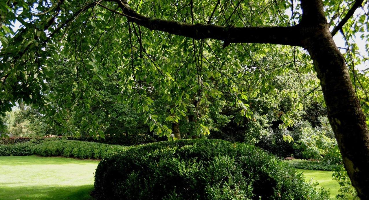 Ambiances jardin DP LANDSCAPE STUDIO SPRL_2932
