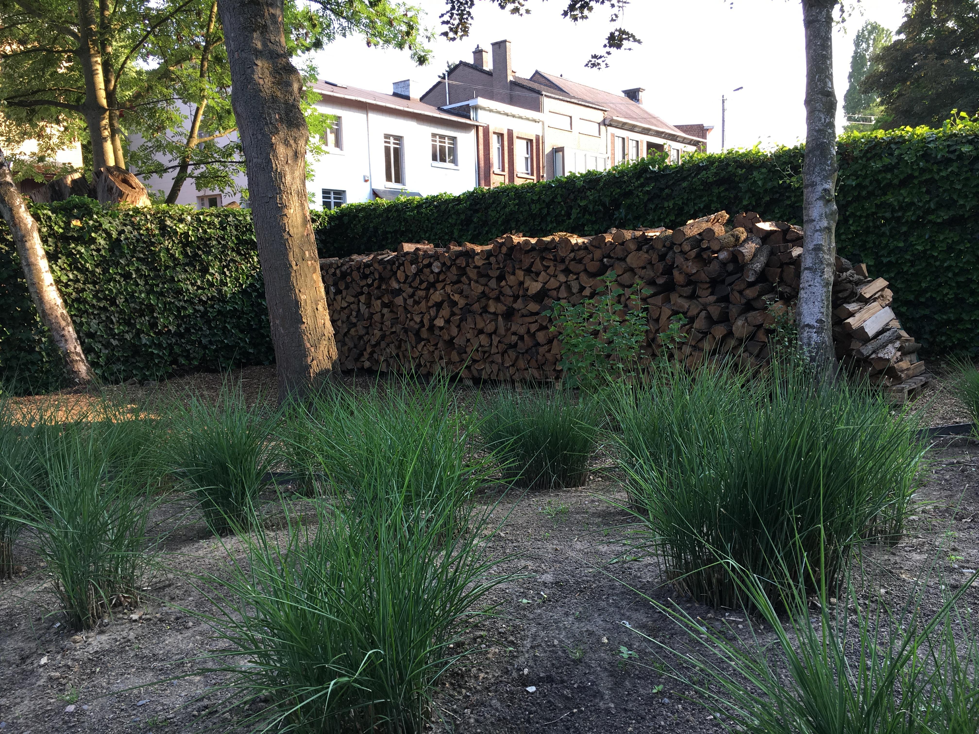 Plantations à Liège