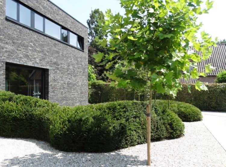ambiances-jardin-francois-piette-architecte-jardin-faimes-liege_3454