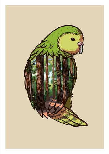 Kakapo.png