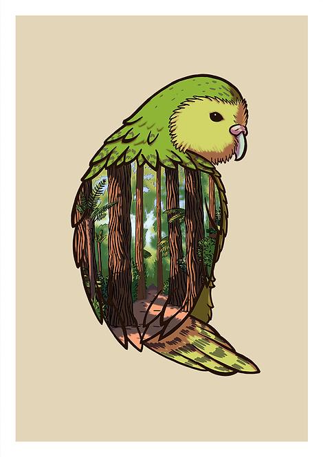Kakapo- Postcard