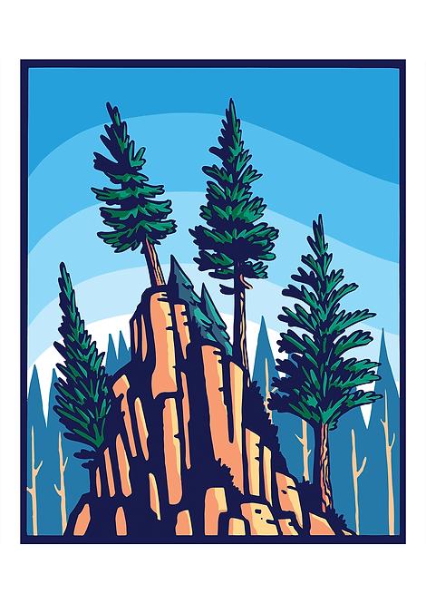 Mountain Pine - Postcard