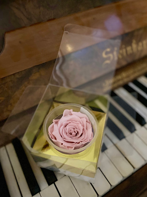 Individually boxed Everlasting Rose