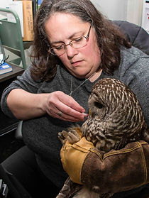 Co-Founder Dr. Helene Van Doninck hand feeds a barred owl at the CWRC.