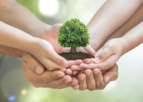 Tree planting on volunteer family's hand