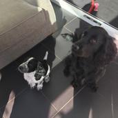 GU14 Puppy Visits