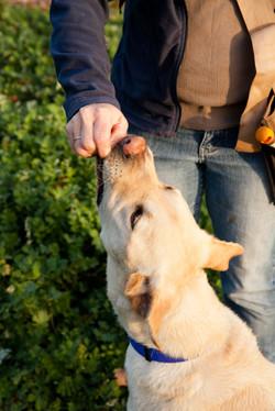 Australian Truffle Traders Truffle Hunts Manjimup Truffle