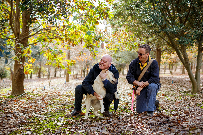 Australian Truffle Traders, Truffle Kerfuffle , Mark Best