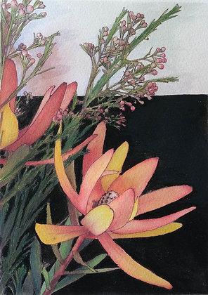 Leucadendron I - fine art print