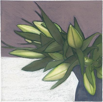 Lily pods - fine art print