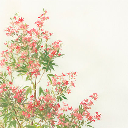 NSW Christmas Bush - fine art print