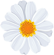 DaisyWhiteClipArtpic1.png
