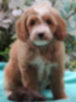 PennyWinstonPurpleGJune112018pic1.jpg