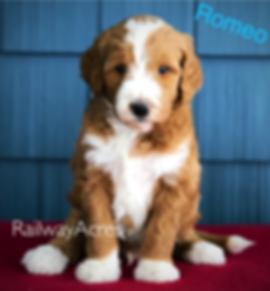 RomeoF1MRRpic1.png