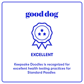 Good Dog Exellent Badge Standard Poodles