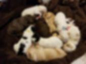 Harper Maxximus pups April 23 2018 pic1.