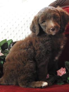 HarperMaxBlueCollarBoyMay312018pic2.jpg