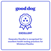 Good Dog Exellent Badge Miniature Poodle